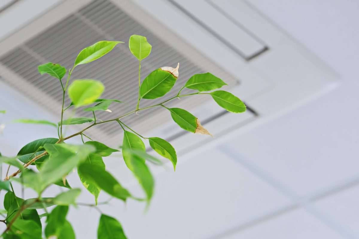 3 Essential Appliances for Better Indoor Air Quality